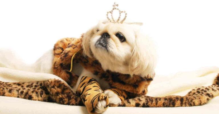 Dog wearing a tiara and fur coat
